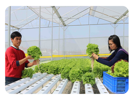 Anh Hoàng Quốc Trung - Quản lý Farm Hợp tác xã trồng rau sạch