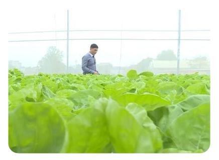 Mô hình nhà lưới trồng cây công nghệ cao trong nông nghiệp hiện đại